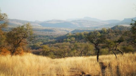 Nature Walk in Rajasthan