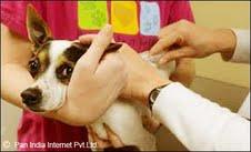 Veterinary Clinic in Ranchi