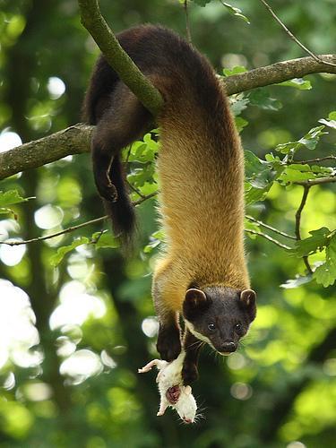 Wildlife at the Daranghati Sanctuary