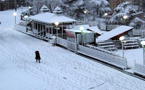 Travel and Tourism Business in Shimla