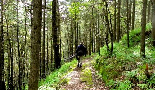 Things to do at the Chail Sanctuary