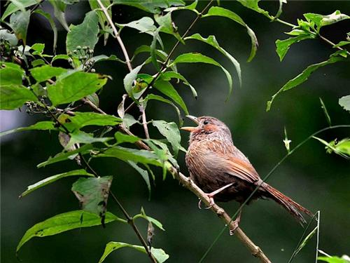 Birds at Chail Sanctuary