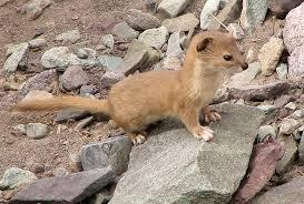 Fauna at the Daranghati Sanctuary
