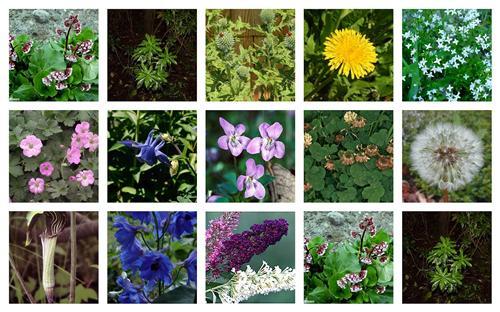 Flora in Shimla
