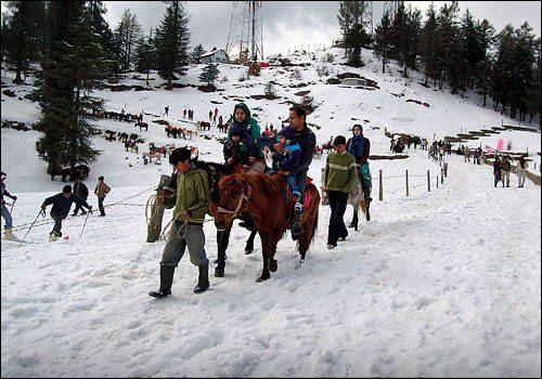 Animal Ride at Chail