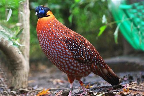 Birds at the Himalyan Bird Park
