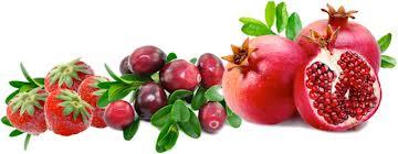 Fruits Processing Industry, Shimla