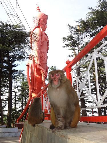 The Hanuman Statue near Jakhoo Temple