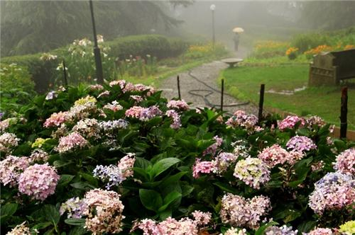 Botanical Gardens Shimla