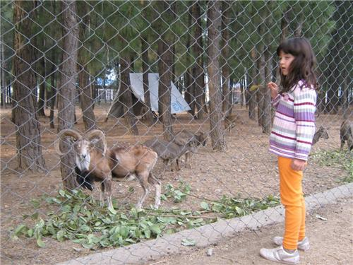 Water Catchment Sanctuary in Shimla