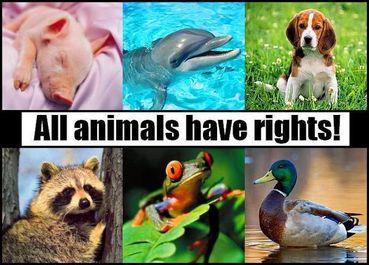 Animal Welfare in Shimla