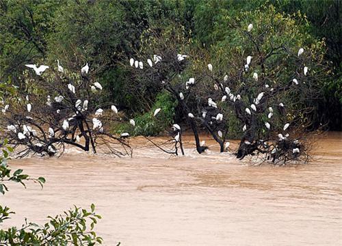 Mandagadde bird sanctuary in Shimoga
