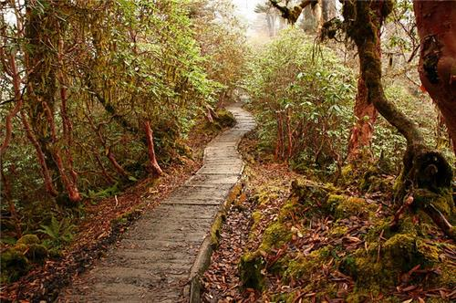 forests of sikkim