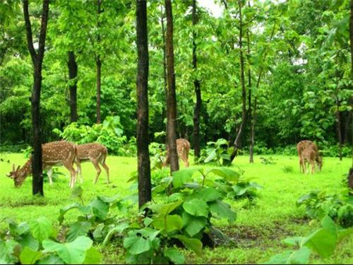 Silvassa Wildlife Sanctuary