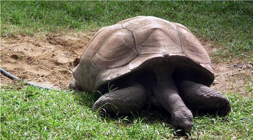 Zoo in Hyderabad
