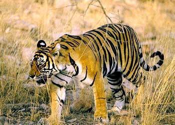 Wildlife attractions in Adilabad