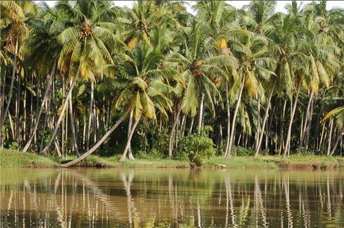 Backwaters of Thiruvananthapuram