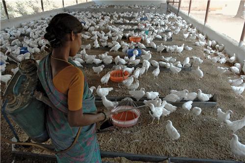Poultry Farms in Tirupur