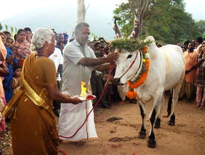 Tamil Nadu Maatu Pongal