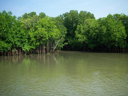 Forests in Tamil Nadu