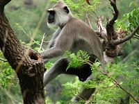 Indira Gandhi Wildlife Sanctuary