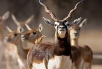 Point Calimere Wildlife Sanctuary