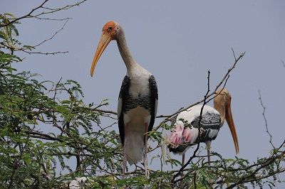 Bird Sanctuary Tirunelveli