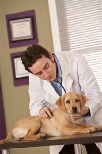 Nellai Pet Clinics