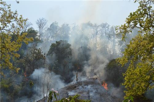 Forests burning for jhum