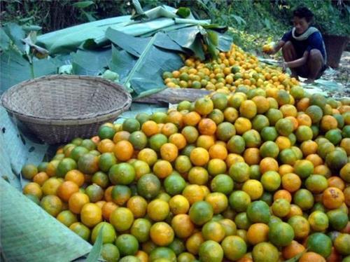 Jampui oanges during Orange festival