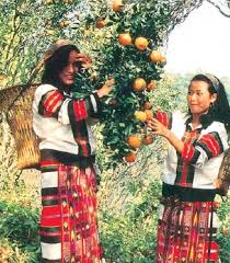 Jampui laddies picking oranges