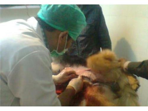 Veterinary Services provided in Uttar Pradesh