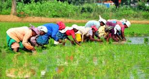Agriculture in Uttar Pradesh