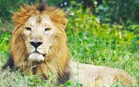Zoo in Uttar Pradesh