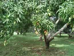 Park and Gardens in Dhampur