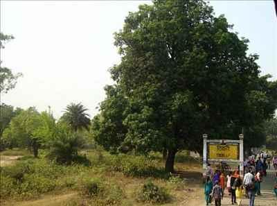 A View of Tikri Town