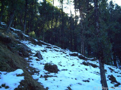 A view of the snowfall in Chakrata