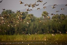 Kondakarla Bird Sanctuary near Vizag