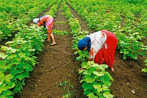 Agriculture in Wardha