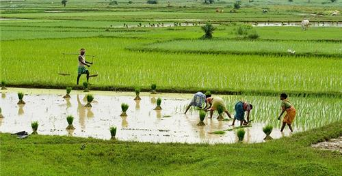 Agriculture economy of West Bengal