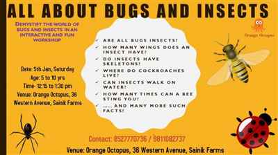 ALL ABOUT BUGS AND INSECTS
