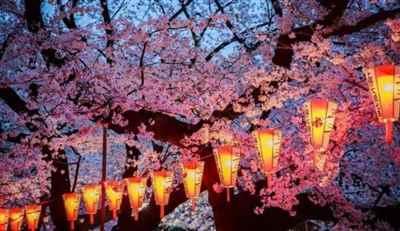 4th India International Cherry Blossom Festival 2019