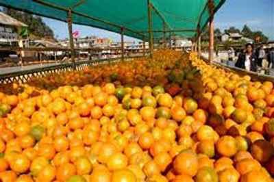16th State level Orange Festival