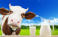 Dilip Pure Milk Suppliers