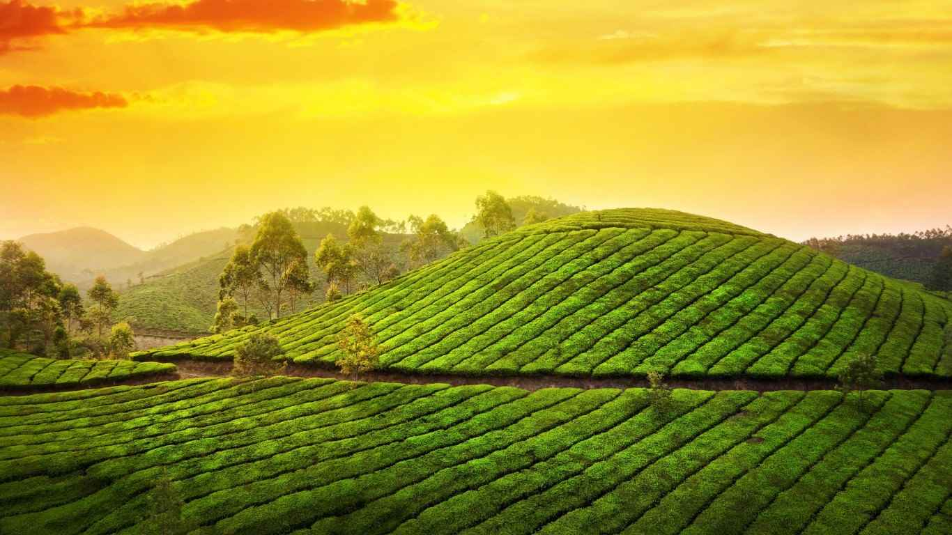 870245371munnar_kerala_india_asia_nature_plantation_tea_hills_trees_sky_clouds_sunrise_morning_landscape-HD