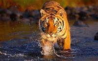 Kalakad Mundanthurai Tiger Reserve Ecotourism