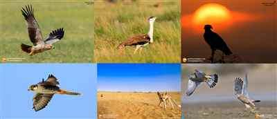 Desert National Park Guide Musa Khan