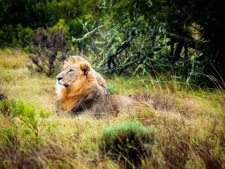 Ngorongoro National Park 12