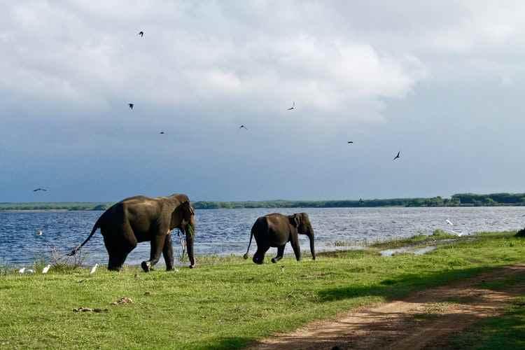 Tarangire Park 10