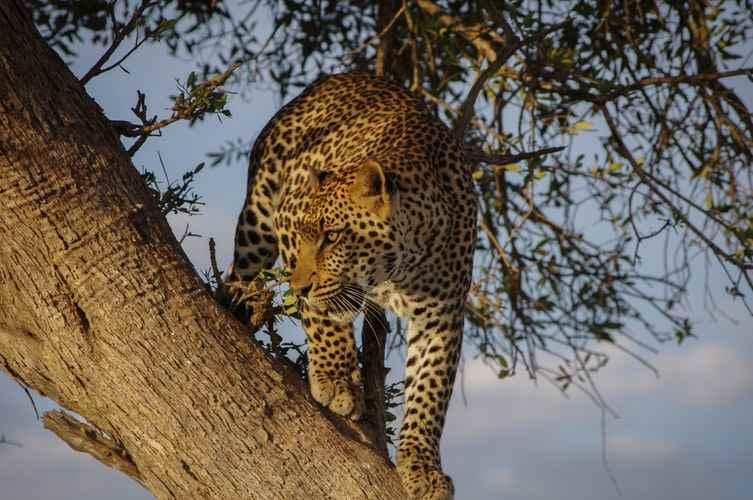 Ngorongoro National Park 15